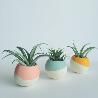 Paint Dipped Pod Air Plant Planters + Air Plant Included
