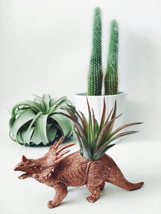 Small Copper Styracosaurus Dinosaur Planter Air Plant
