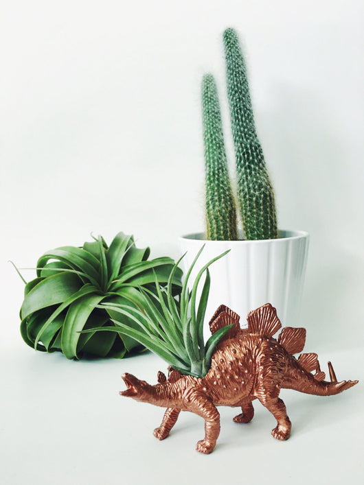 Small Copper Stegosaurus Dinosaur Planter Air Plant