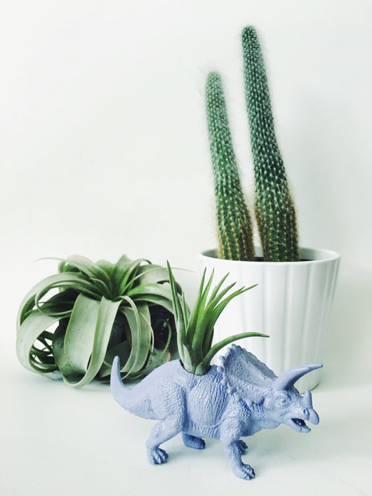 Small Pastel Purple Triceratops Planter with Air Plant