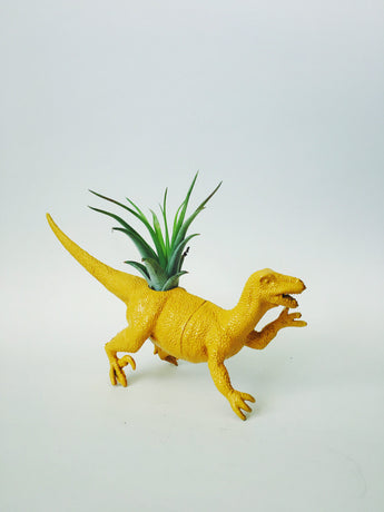 Large Yellow Velociraptor Dino Planter with Air Plant