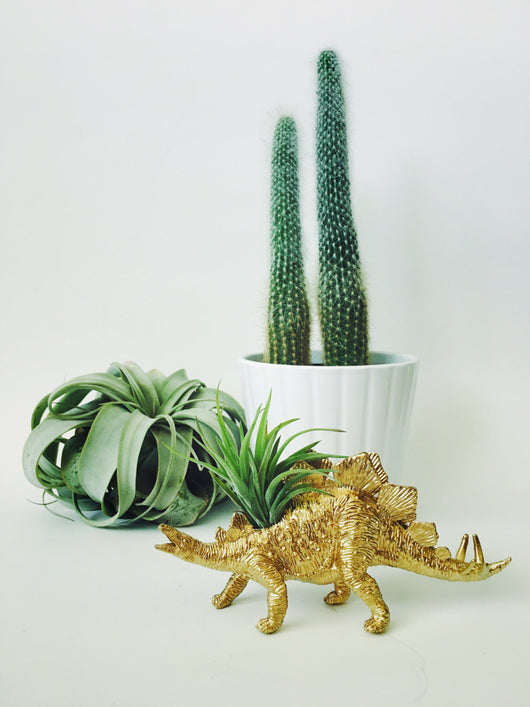 Small Gold Stegosaurus Dino Planter with Air Plant
