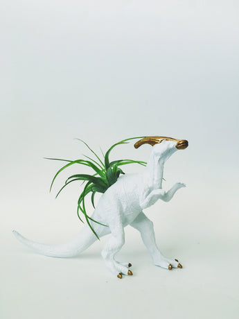 Large White + Gold Parasaurolophus Dinosaur Planter with Air Plant