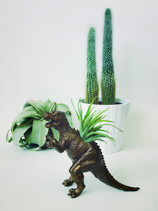Small Bronze Ceratosaurus Dinosaur Planter Air Plant