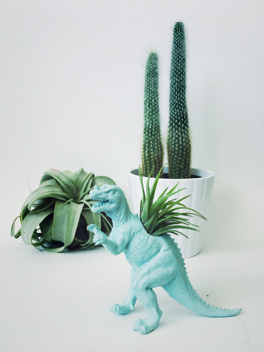 Small Pastel Blue Ceratosaurus Dinosaur Planter with Air Plant