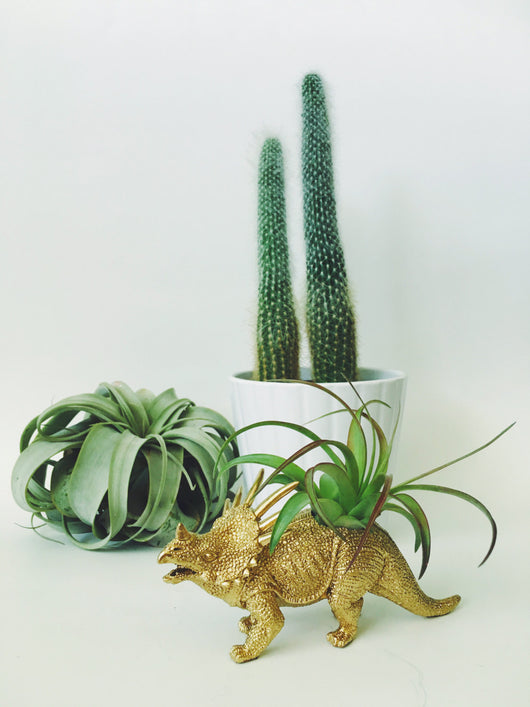 Small Gold Styracosaurus Dinosaur Planter with Air Plant