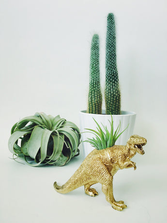 Small Gold T-Rex Dinosaur Planter with Air Plant