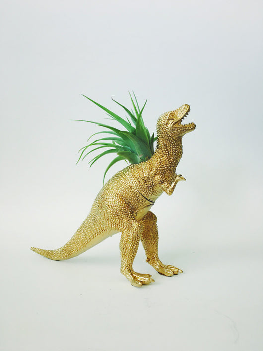 Large Gold T-Rex Dino Planter with Air Plant