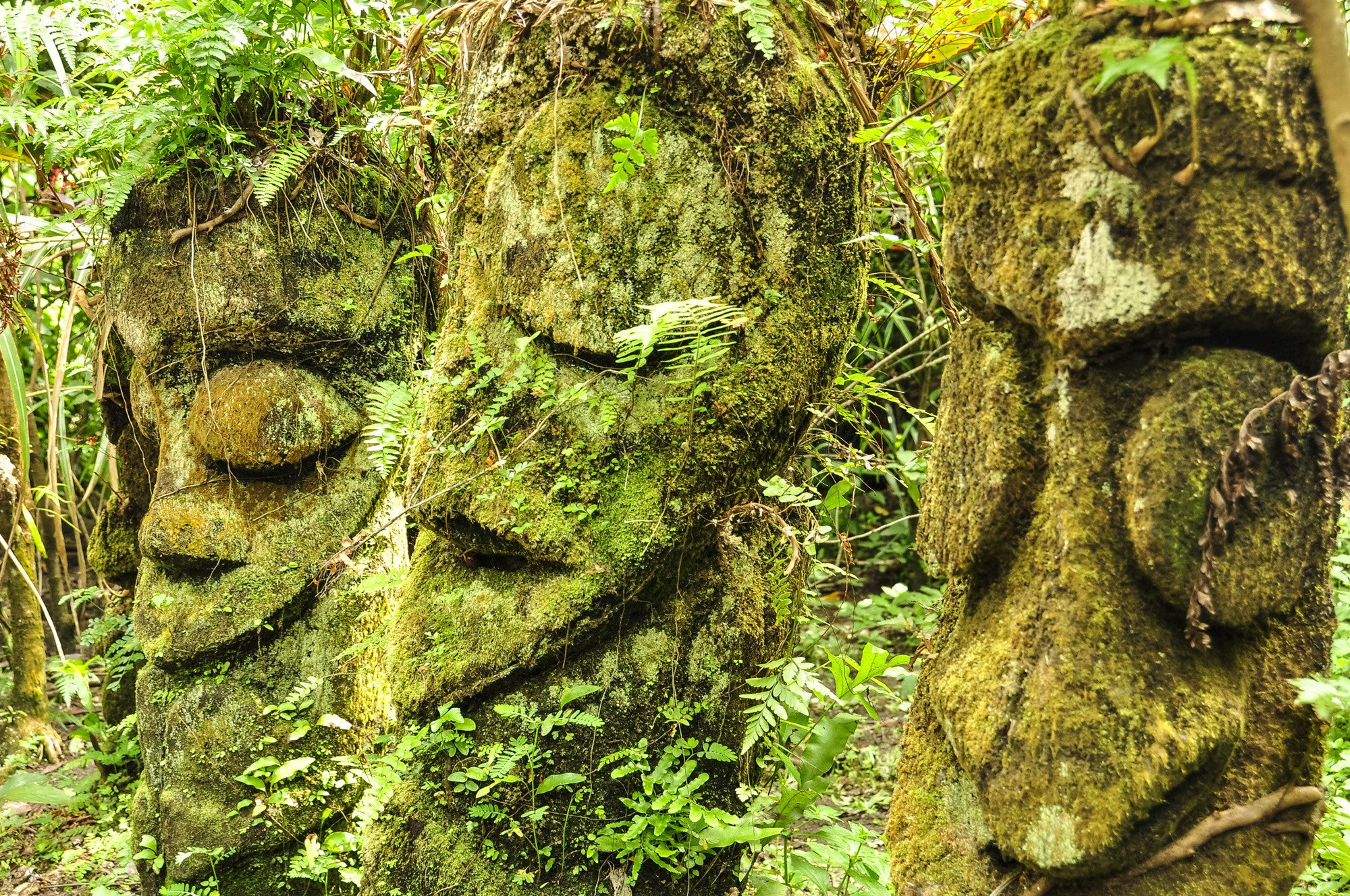 Fern Tree Carvings