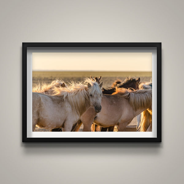 Gobi Horses at Sunrise