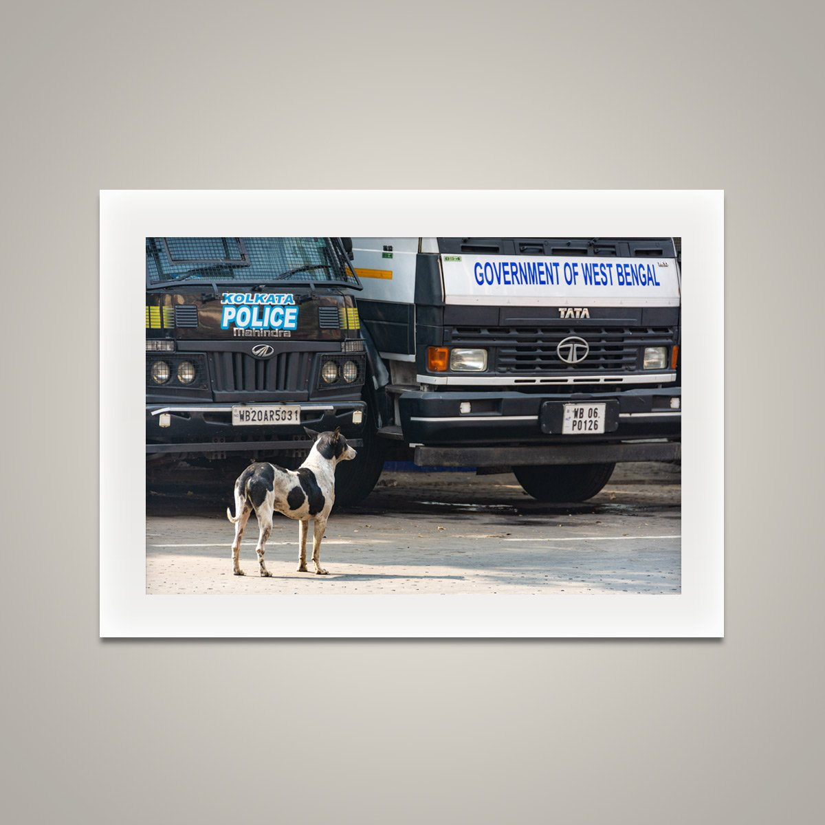 Street Dog in Charge