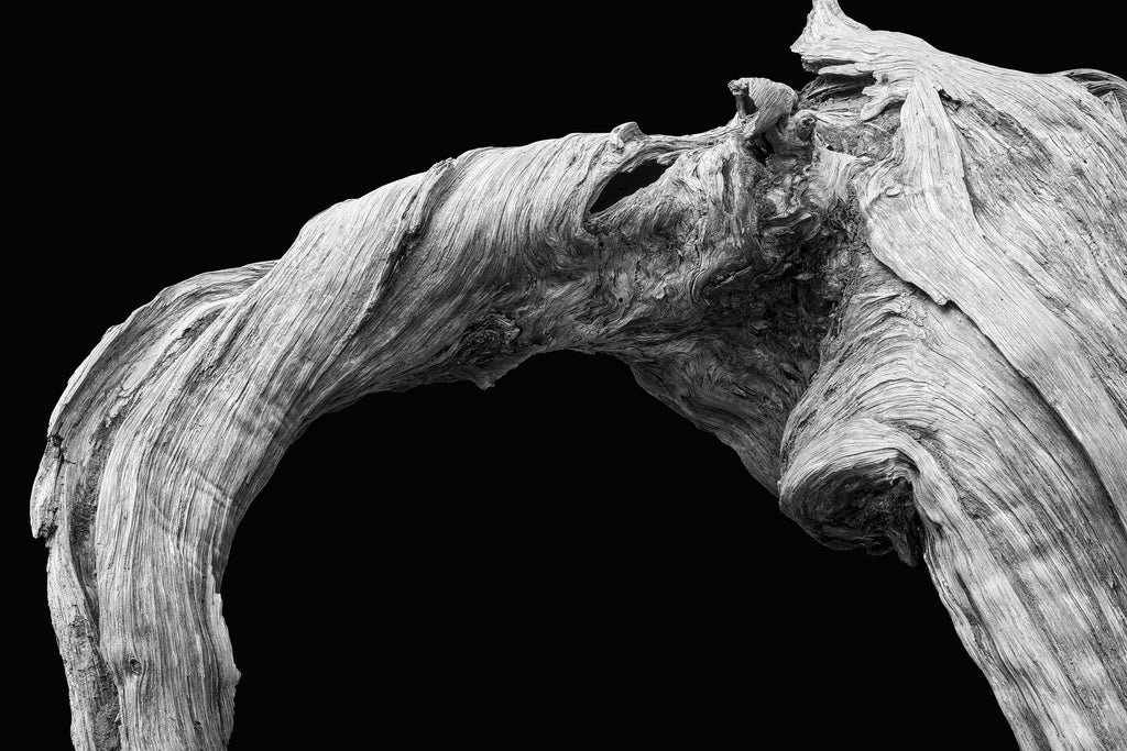 Minimalist new photograph celebrates the detailed texture of a twisted old tree