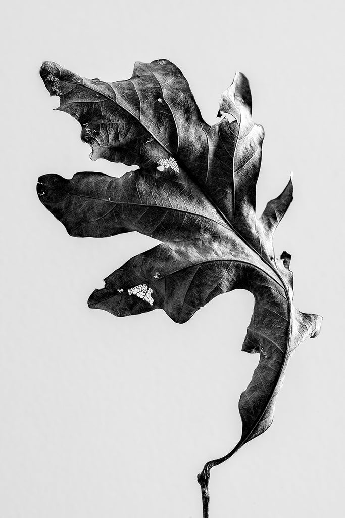 Black and white photographs of autumn leaves with a poem by Emily Brontë