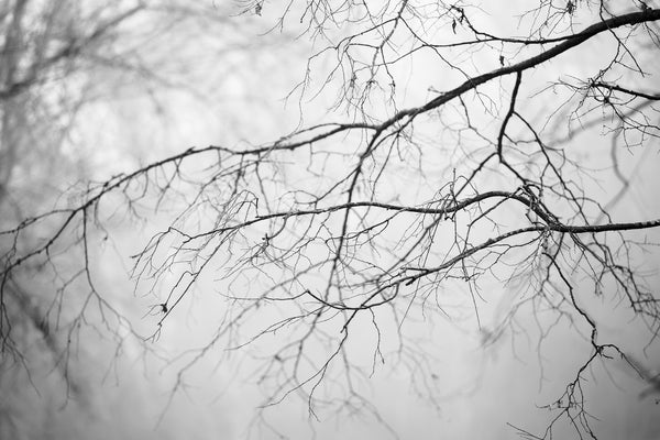 New photographs of trees and tree branches in atmospheric morning fog