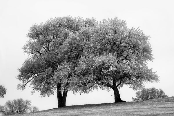 Summer Trees Black and white photograph by Keith Dotson. Click to buy a fine art print.