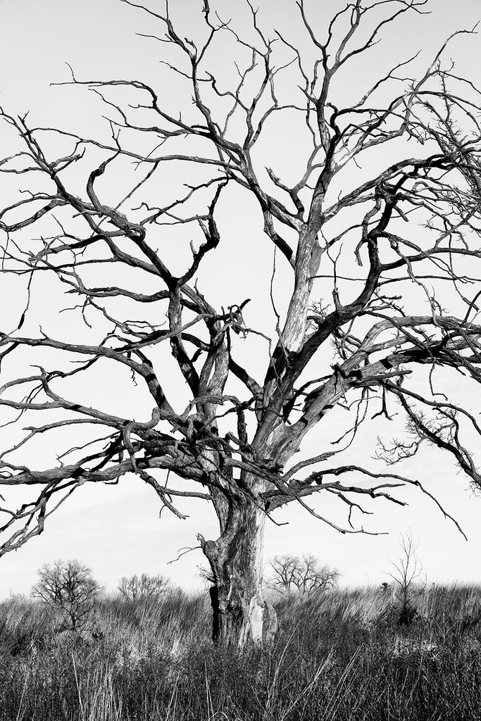 Barren Tree on the Prairie, black and white photograph by Keith Dotson. Buy a print.