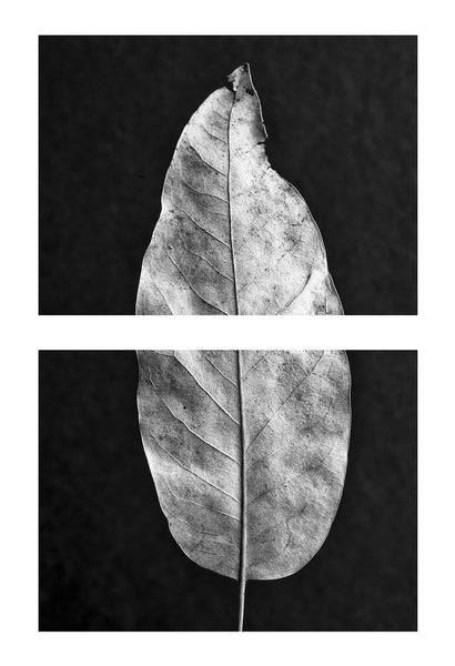 Portrait of a Leaf, two stacked macro photographs of a dead leaf, overall size 40 x 60-inches