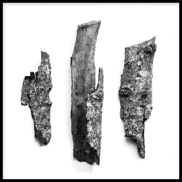 Black and white minimalist nature photograph of three tree bark fragments, by fine art photographer Keith Dotson. Click to buy a fine art print.