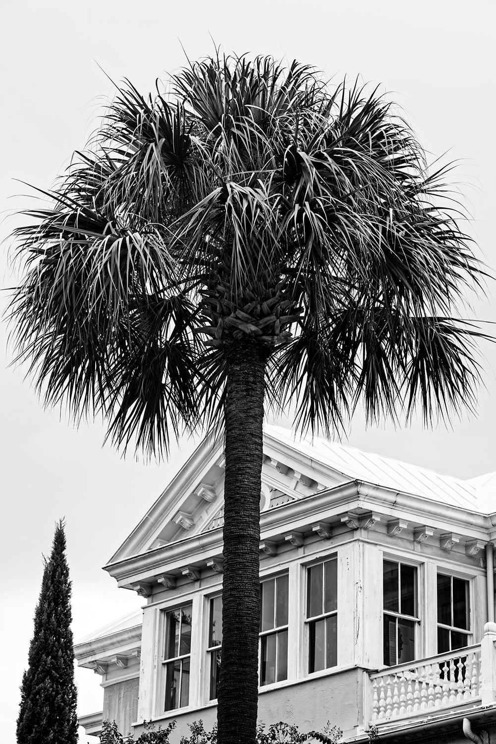 Charleston Historic House with Palm Tree - Black and White Photograph by Keith Dotson. Buy a fine art print.