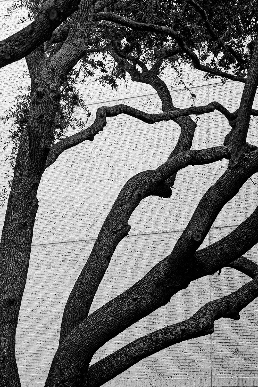 Charleston Urban Oaks - Black and White Photograph by Keith Dotson. Buy a fine art print.
