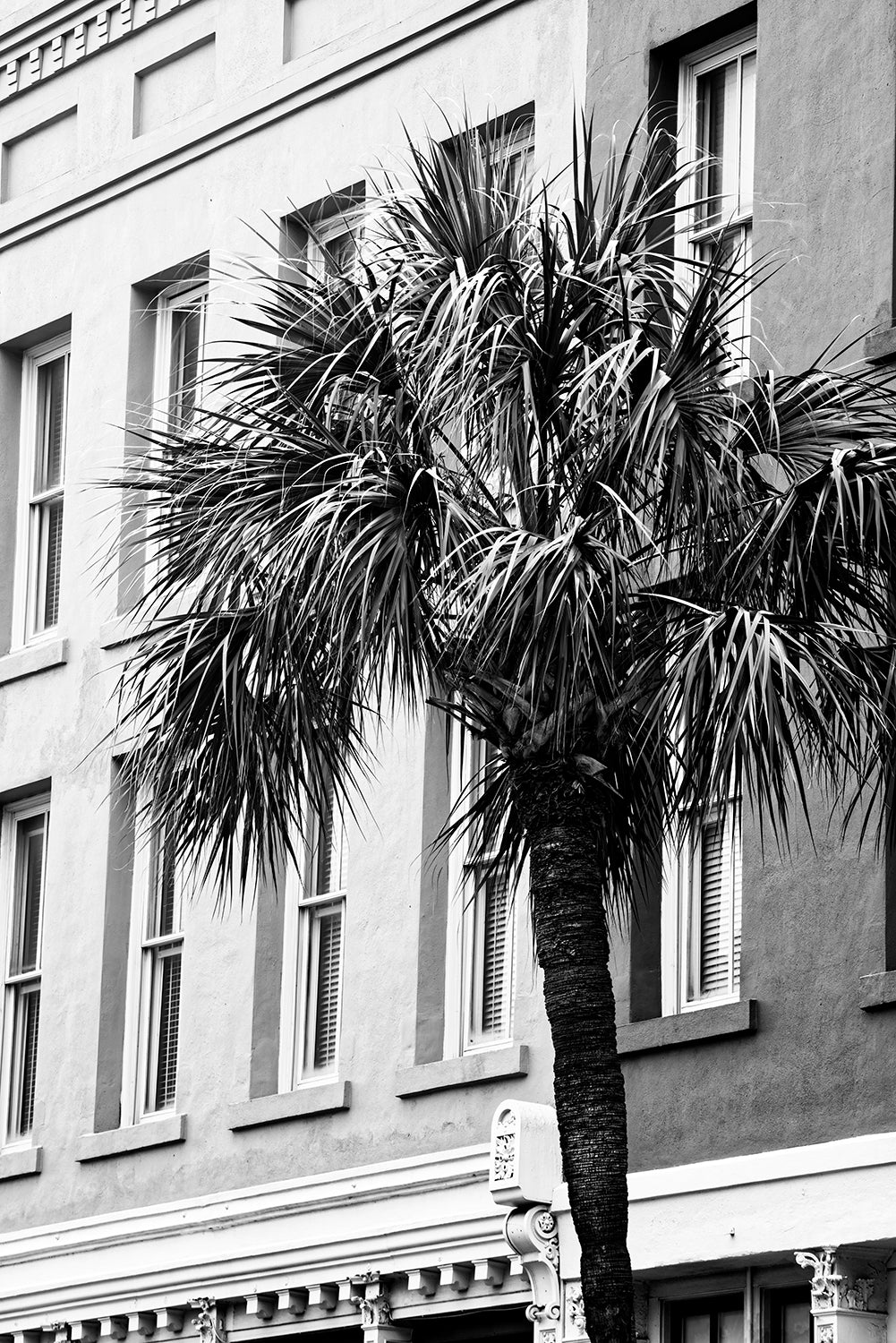 Charleston Urban Palm Tree - Black and White Photograph by Keith Dotson. Buy a fine art photograph here.
