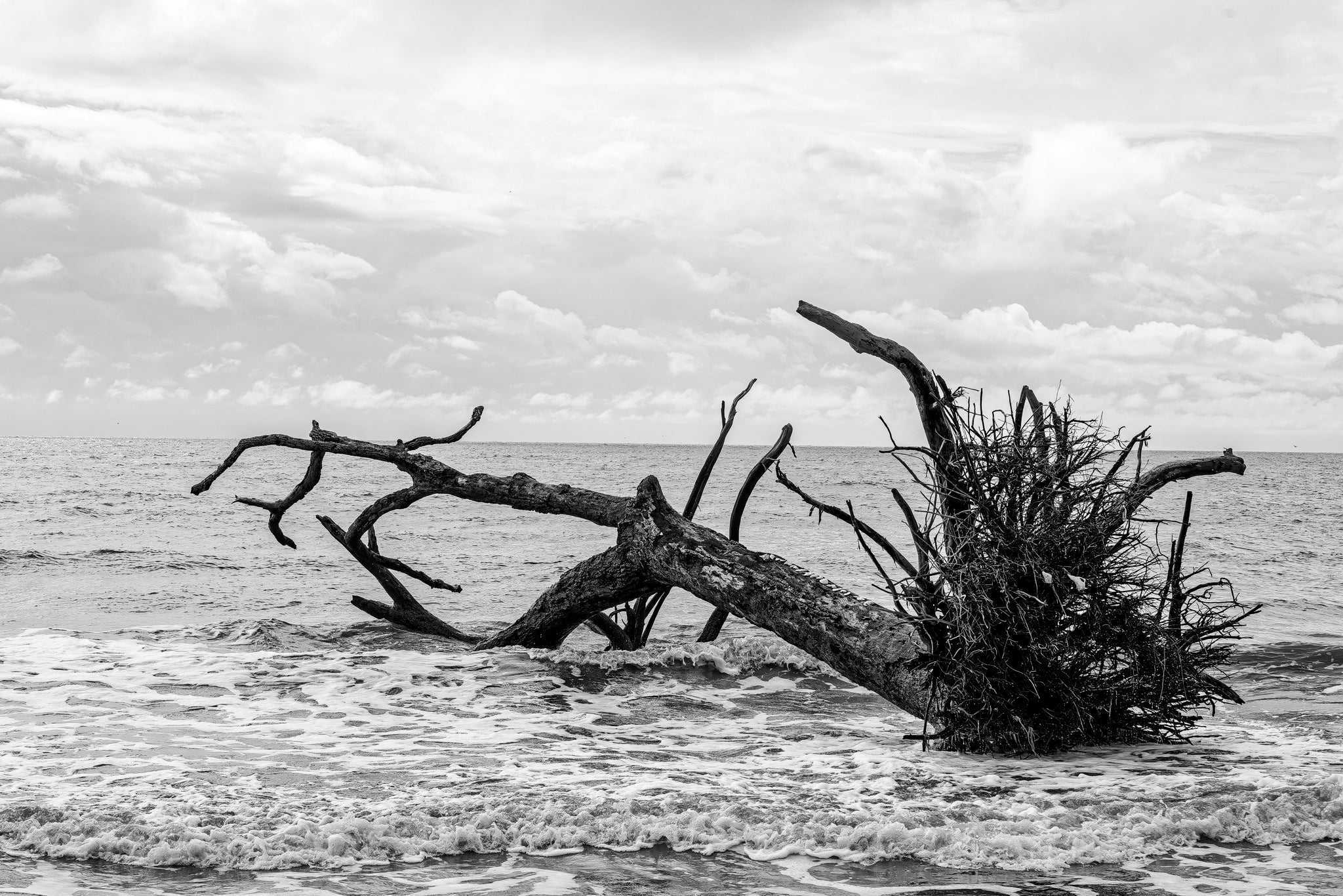 Fallen Beach Tree in Ocean Surf - Black and White Landscape Photograph