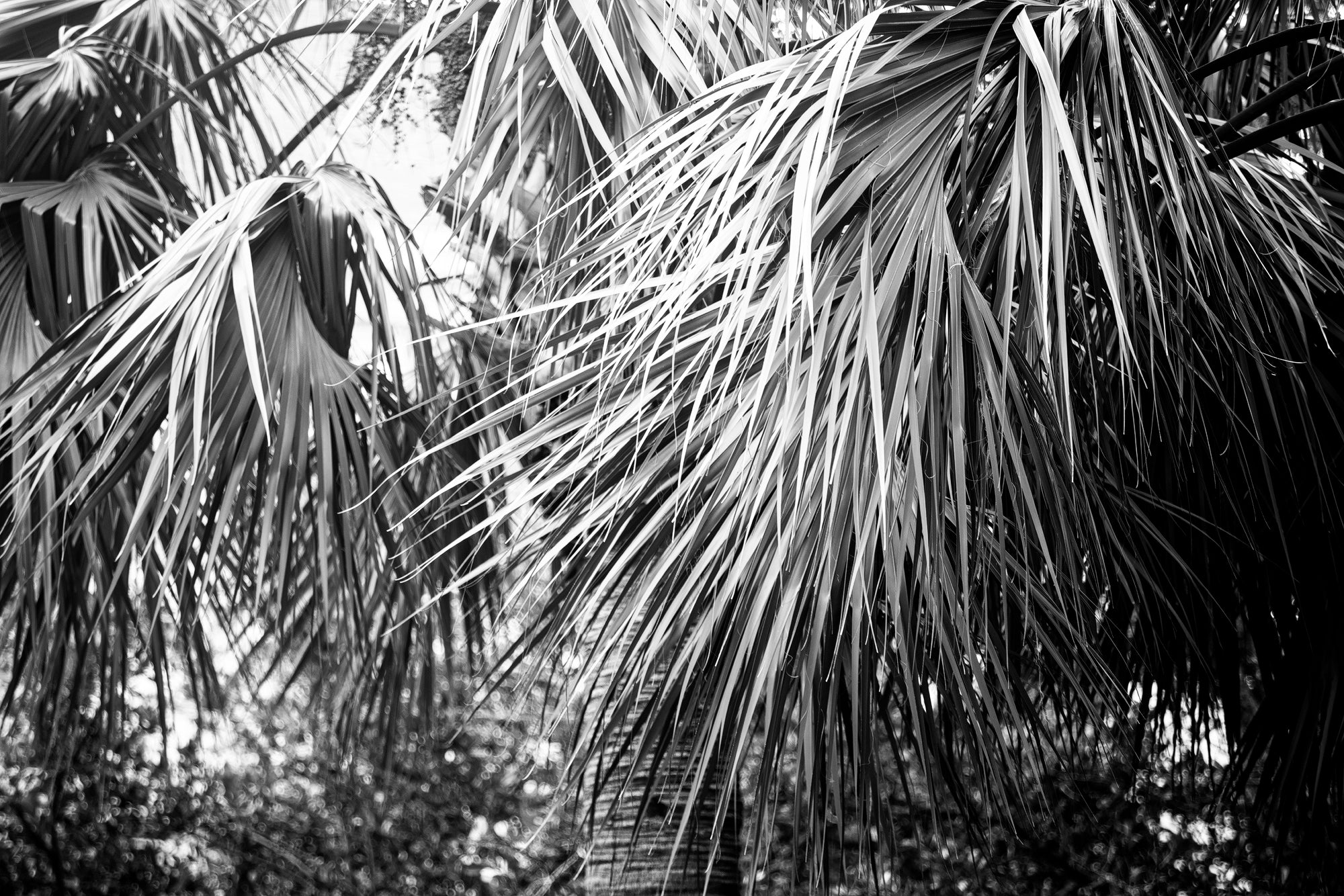 Palm Tree Abstraction - Black and White Photograph by Keith Dotson. Buy a fine art print.