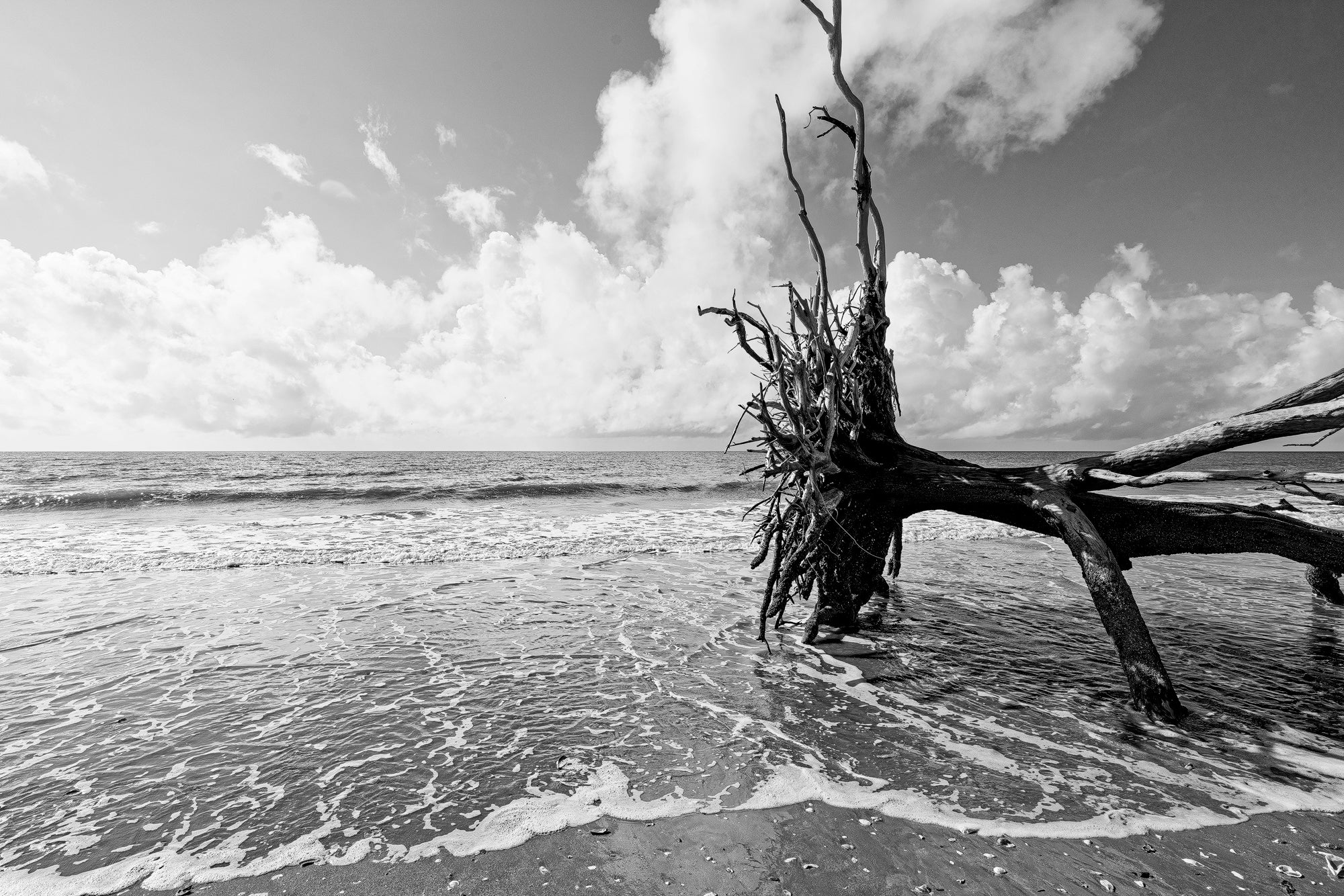 Fallen Tree in the Surf of Driftwood Beach - Black and White Photograph by Keith Dotson. Buy a print.
