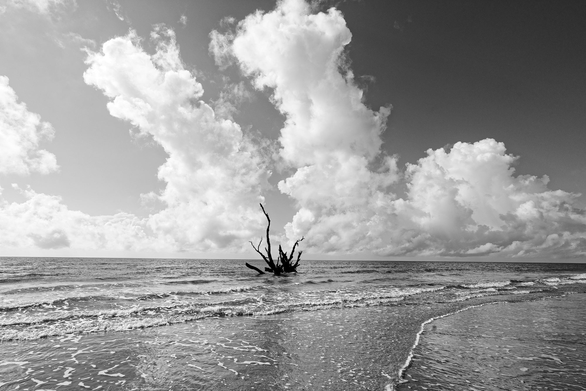 Driftwood in the Ocean Looks like a Sea Monster - Black and White Photograph by Keith Dotson. Buy a print.