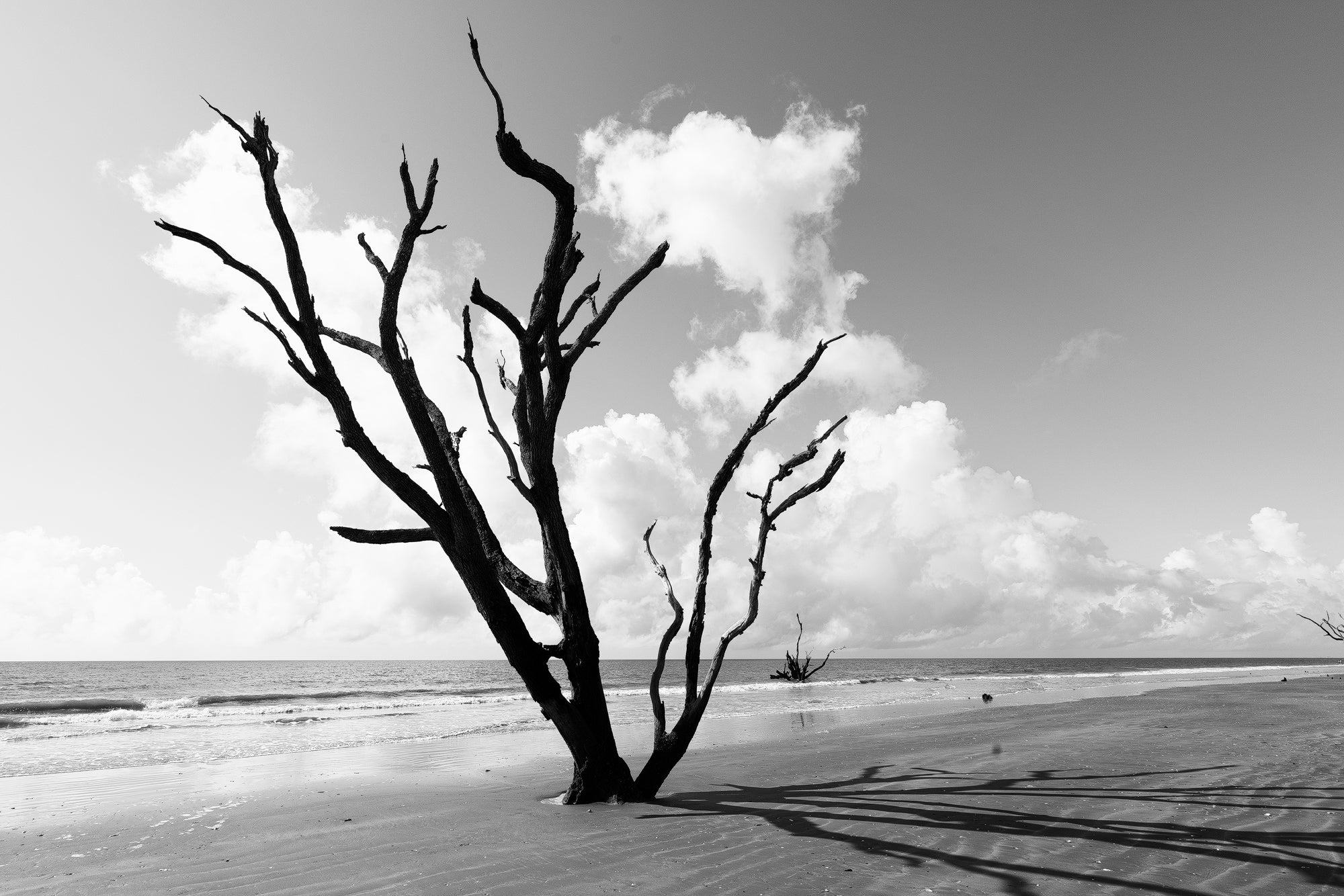 Driftwood Beach Trees - Black and White Landscape Photograph by Keith Dotson. Buy a fine art print.