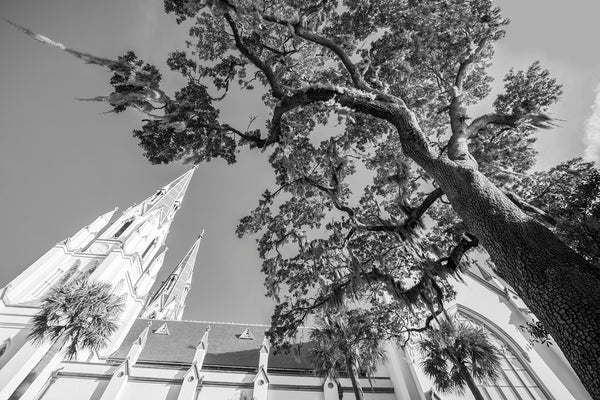 Savannah Cathedral Tree - Black and White Photograph by Keith Dotson. Buy a fine art photograph.