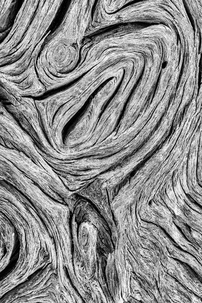 Driftwood Patterns - Black and White Photograph by Keith Dotson. Buy a fine art print.