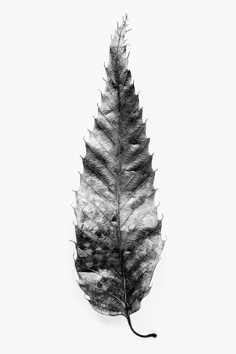 Leaf Texture - Black and White Photograph by Keith Dotson. Buy a fine art print here.