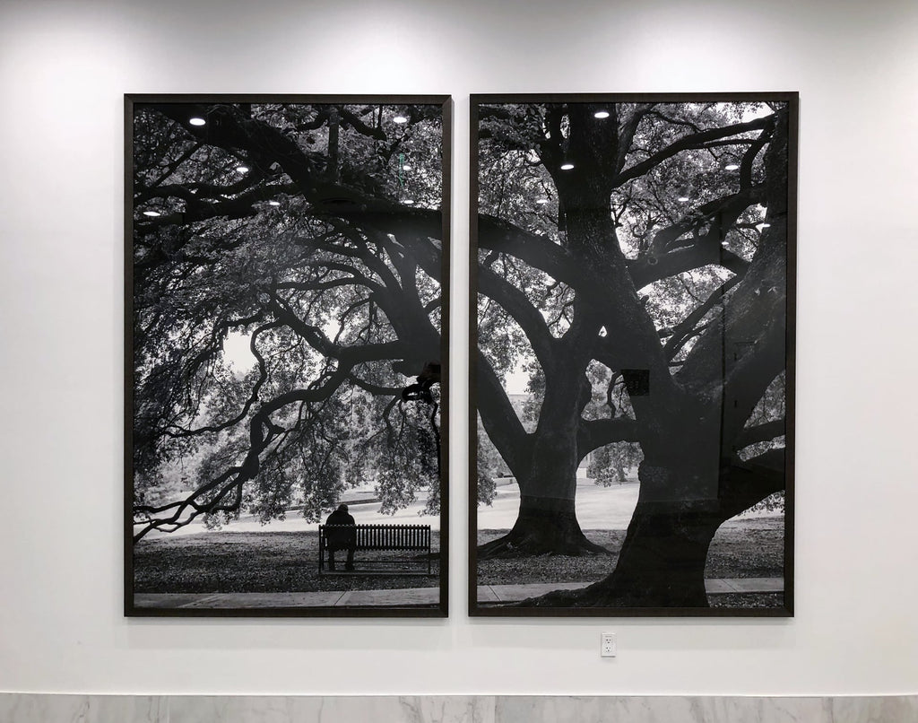 In the Shade of the Mighty Oaks, 2016, black and white photographs by Keith Dotson. This is normally one photograph. The designers wanted to frame is as a set of two.