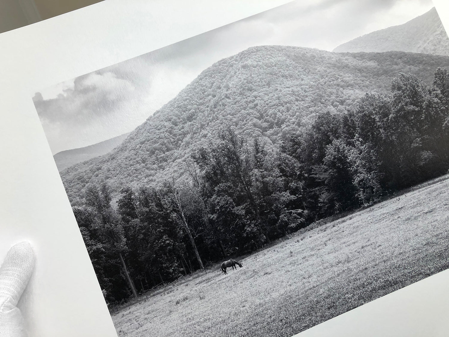 Black and white photograph of a horse grazing in the Smoky Mountains, printed on museum-quality baryta surface fine art paper.