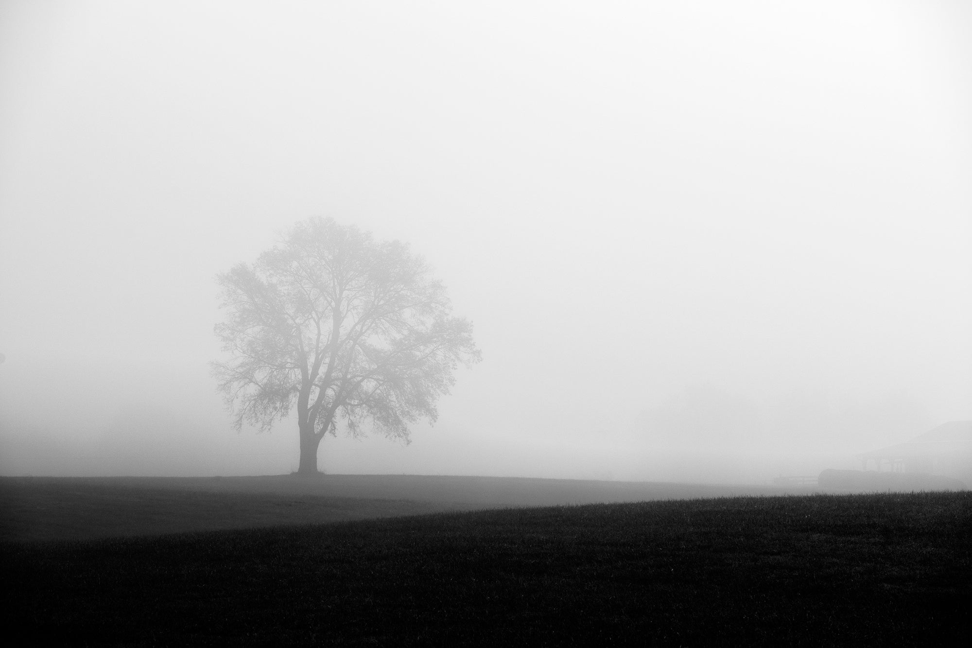Foggy Landscape with a Lone Tree - Black and White Photograph by Keith Dotson
