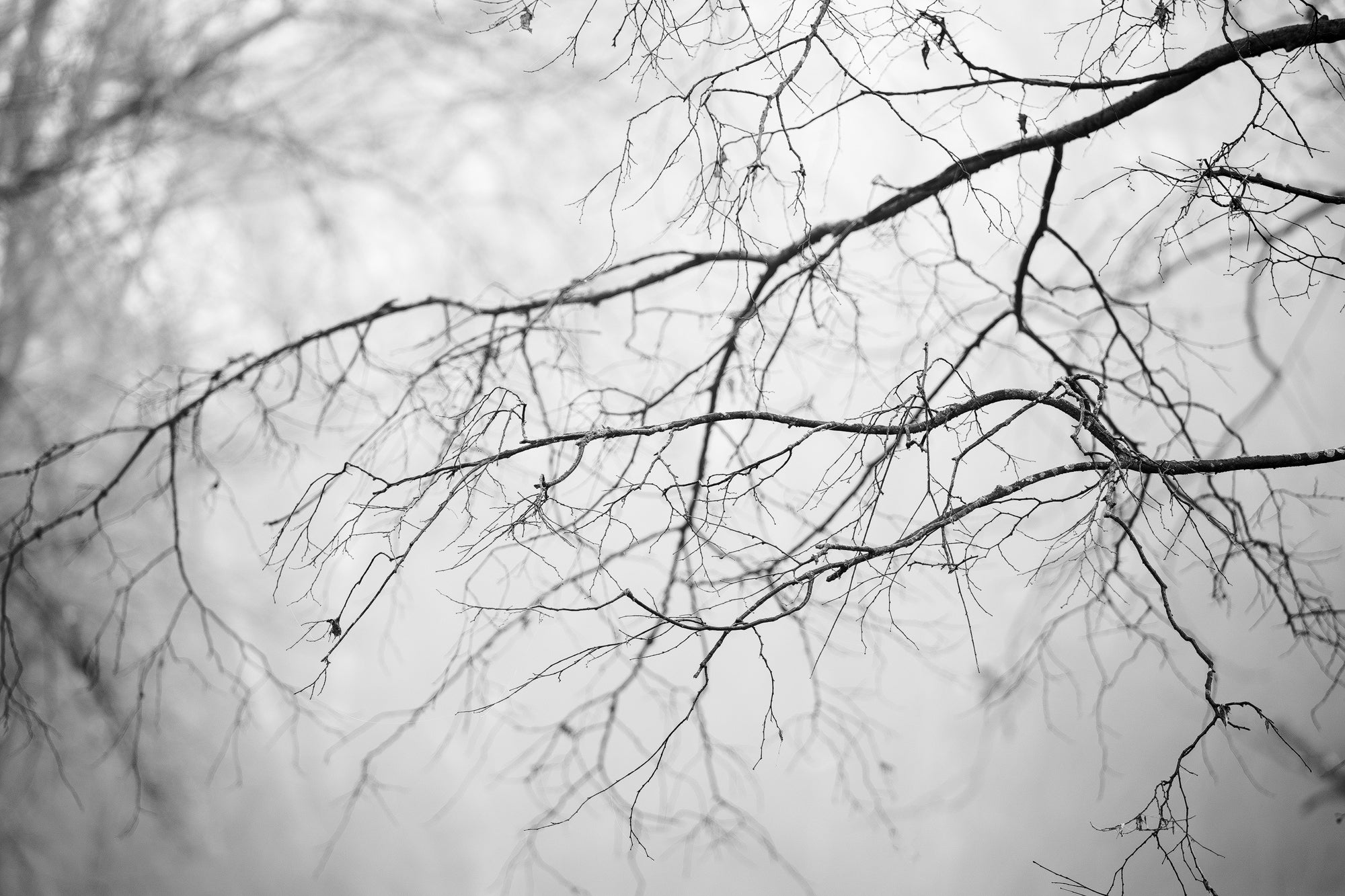 Winter Branches - Black and White Landscape Photograph by Keith Dotson. Click to buy a fine art print.