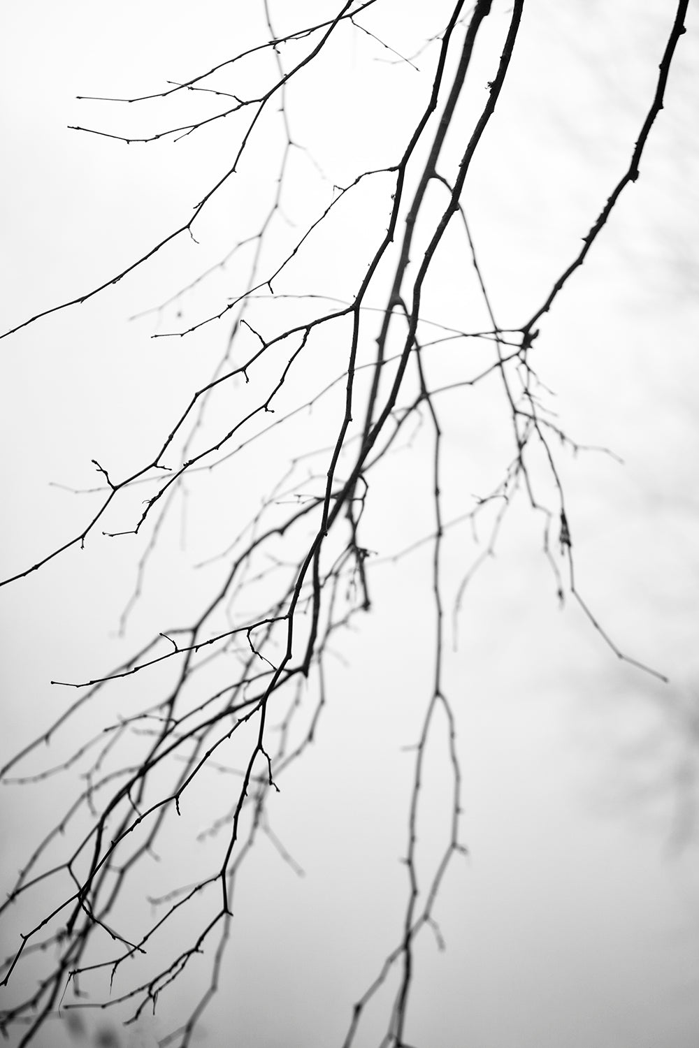 Barren Winter Branches - Black and White Landscape Photograph by Keith Dotson. Buy a fine art print.