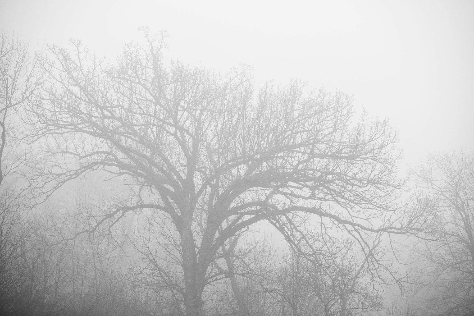 Foggy Morning Landscape - Black and White Landscape Photograph by Keith Dotson. Buy a print.