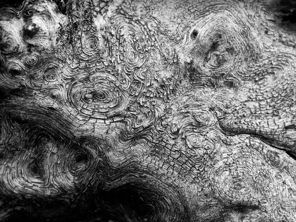 Swirling Woodgrain on a Fallen Tree in Montana, black and white photograph by Keith Dotson.