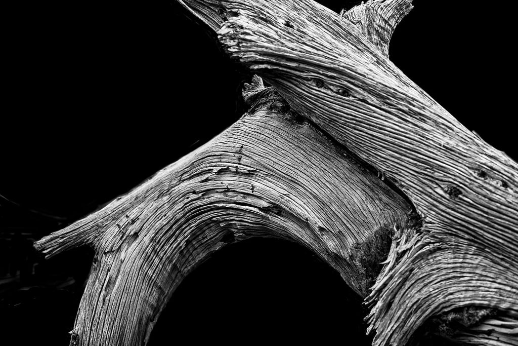 Cowboy Walk, Utah. Black and white photograph of a weathered desert tree by Keith Dotson. Click to buy a fine art print.