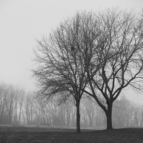 Stay Close, It's Cold This Morning, a black and white landscape photograph by Keith Dotson