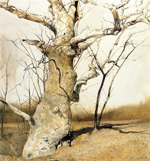 Sycamore by Andrew Wyeth, 1982