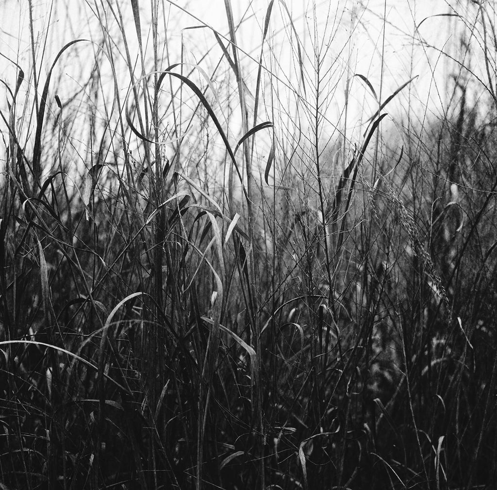 Black and white photograph of a section of overgrown winter grasses, forming a lyrical, almost abstract composition. This photograph was captured on Ilford 400 speed medium format (120mm) film, and scanned at a very large size.