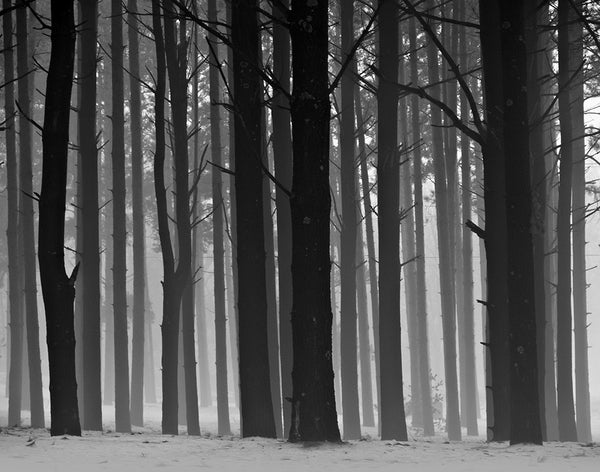 Black and white landscape photograph of a forest in fog.