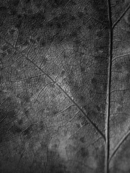 close-up abstract photograph of a detailed leaf