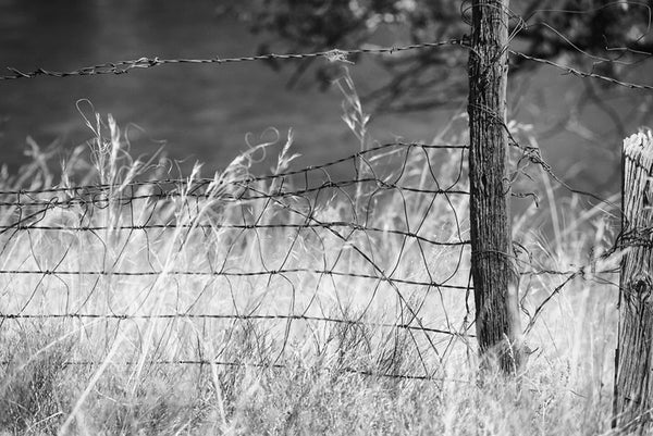 Black and white fine art landscape photograph of a quiet scene, with a fence line and gently blowing grasses.