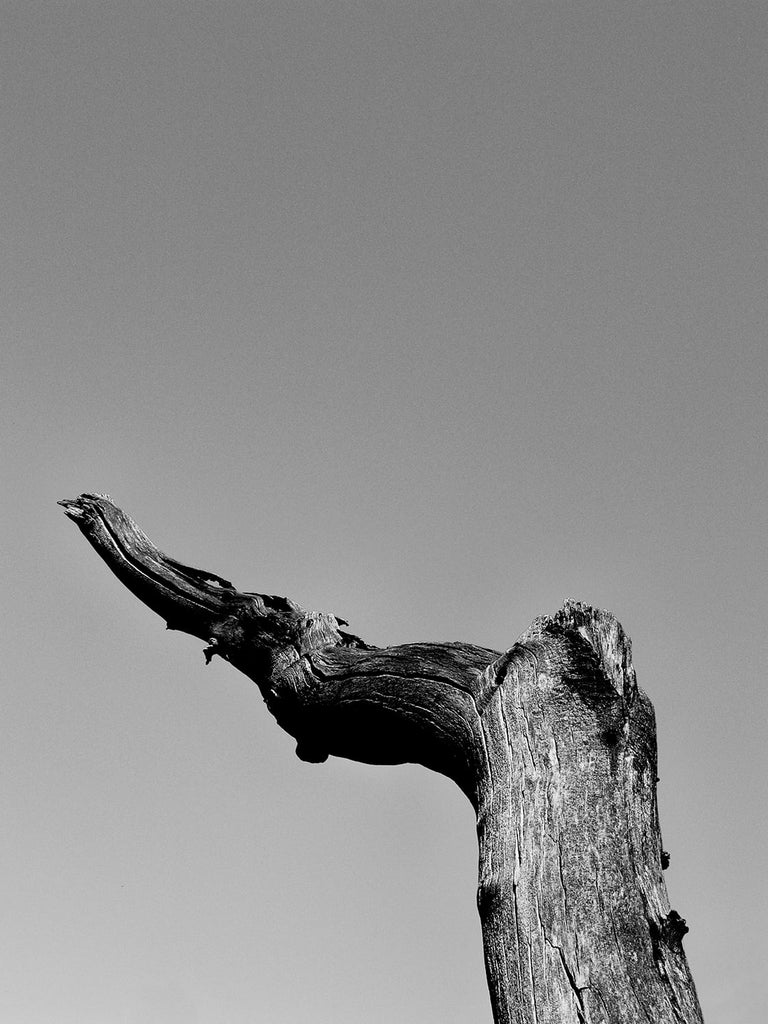 Black and white landscape photograph of a dead tree curving across the blue West Texas desert sky.