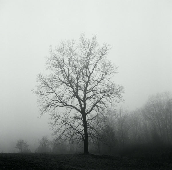 Black and white landscape photograph of a barren tree on a foggy, dark winter day.