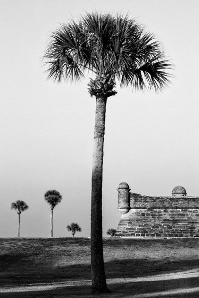 Black and white landscape photograph of a tall palm tree with historic Castillo de San Marcos in the background, along the Atlantic coast at St. Augustine, Florida.